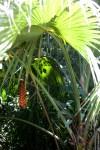Botanical Ark foliage