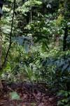 Rain Forest Vegitaion